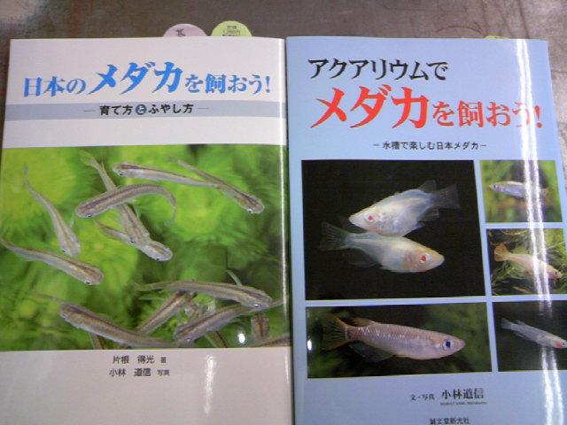 日本のメダカを飼おう片根得光著 誠文堂新光社刊 売れてます