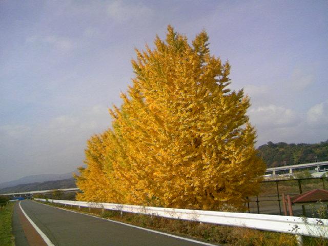 黄葉 冬近し
