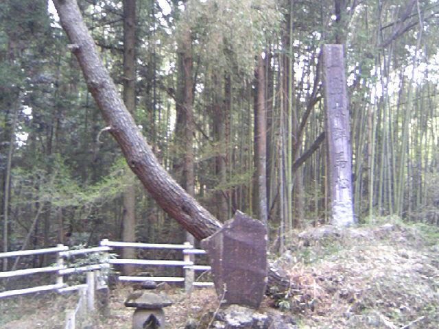 霊木 群馬の松