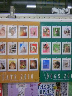 村松誠の猫・犬カレンダー 入荷