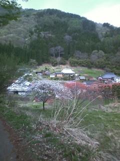上田市 余里の花桃