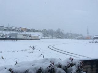 予報どうり雪